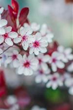 iPhone壁紙のプレビュー 春、白い花が咲き、小枝、ボケ