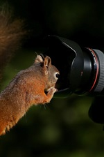 Preview iPhone wallpaper Squirrel and EOS 7D camera