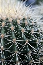 Succulents, cactus, thorns