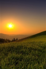 Preview iPhone wallpaper Summer, grass, tree, hill, sunrise