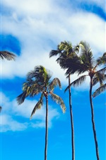 Preview iPhone wallpaper Summer, palm trees, blue sky, clouds