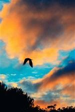Preview iPhone wallpaper Sunset, clouds, bird flight in sky