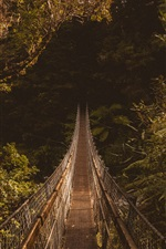 Preview iPhone wallpaper Suspended bridge, forest, trees