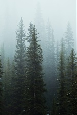 Preview iPhone wallpaper Trees, forest, fog, morning, snow