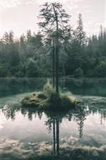Preview iPhone wallpaper Trees, lake, forest, fog, morning