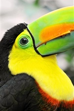 Preview iPhone wallpaper Tropical birds, toucan, colorful