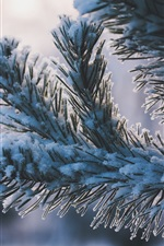 Preview iPhone wallpaper Twigs, snow, winter