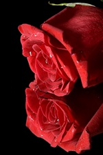 Preview iPhone wallpaper Two red roses, black background
