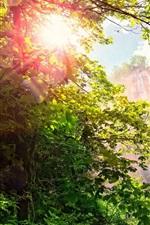 Waterfall, forest, trees, sunshine, glare, beautiful nature landscape