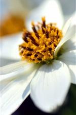 Pétalas brancas flores macro fotografia