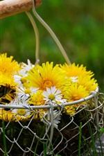Желтая и белая ромашка, корзина, трава