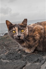 Preview iPhone wallpaper Yellow eyes cat, sea, path, park