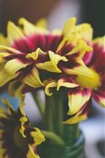 Yellow purple petals, flowers, vase