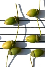 Preview iPhone wallpaper Acorn, music, leaves