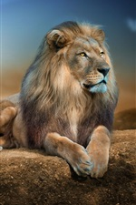 Preview iPhone wallpaper Animal close-up, lion, rest, rocks, sunshine