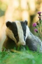 Preview iPhone wallpaper Animals, badger, grass, flowers
