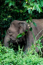 Preview iPhone wallpaper Animals, elephant, trees, grass