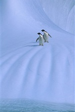 Preview iPhone wallpaper Antarctica, two penguins, ice