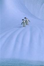 iPhone обои Антарктида, два пингвина, лед