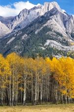 Preview iPhone wallpaper Aspen, Colorado, USA, mountains, trees, autumn