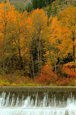 Preview iPhone wallpaper Autumn, forest, trees, waterfalls