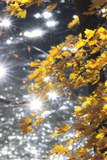 Preview iPhone wallpaper Autumn, forest, yellow leaves, glare