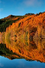 Preview iPhone wallpaper Autumn, trees, forest, lake, water reflection