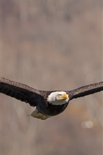 Preview iPhone wallpaper Bald eagle flight, wings, bird