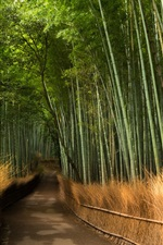 Preview iPhone wallpaper Bamboo, road