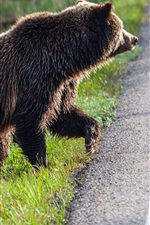 Preview iPhone wallpaper Bears, family, want cross the road