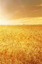 Preview iPhone wallpaper Beautiful wheat field, golden, sunset