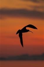 Preview iPhone wallpaper Bird flight, silhouette, sunset