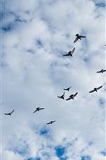 Birds flying, sky, clouds