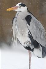 Birds in winter, heron, snow