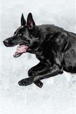 Cão preto correndo, pastor alemão