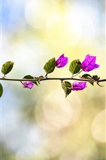 Preview iPhone wallpaper Bougainvillea, pink flowers, twigs, bokeh