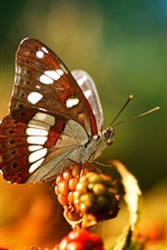 Preview iPhone wallpaper Butterfly, berries, bokeh