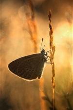 Preview iPhone wallpaper Butterfly, web, grass, sunshine