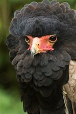 Preview iPhone wallpaper Caracara falcon, feathers, beak