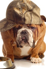Preview iPhone wallpaper Cat and dog, hat, funny, white background