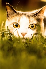 Preview iPhone wallpaper Cat rest in grass, face, look, eyes