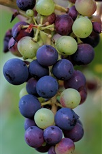 Preview iPhone wallpaper Colorful grapes, green, red, purple, fruit