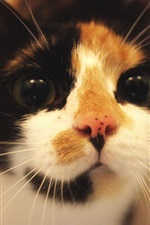 Preview iPhone wallpaper Cute kitten front view, look, pet