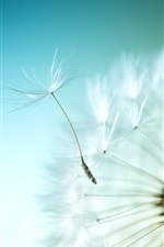 Preview iPhone wallpaper Dandelion flight, blue sky