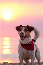 Preview iPhone wallpaper Dog, beach, sun