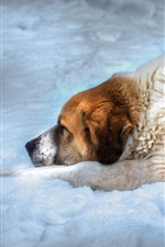 Preview iPhone wallpaper Dog sleep on the snow
