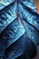 Preview iPhone wallpaper Dry leaf macro photography
