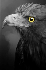 Preview iPhone wallpaper Eagle, black feathers, yellow eyes