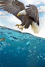 Preview iPhone wallpaper Eagle want to catch fish, water, bubbles
