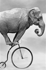 Preview iPhone wallpaper Elephant ride bike, sky, ball, creative design